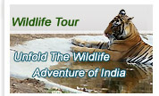 India Wildlife Safari